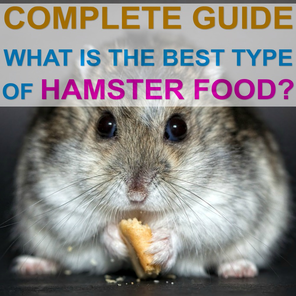 How Much Food Should A Hamster Eat Daily