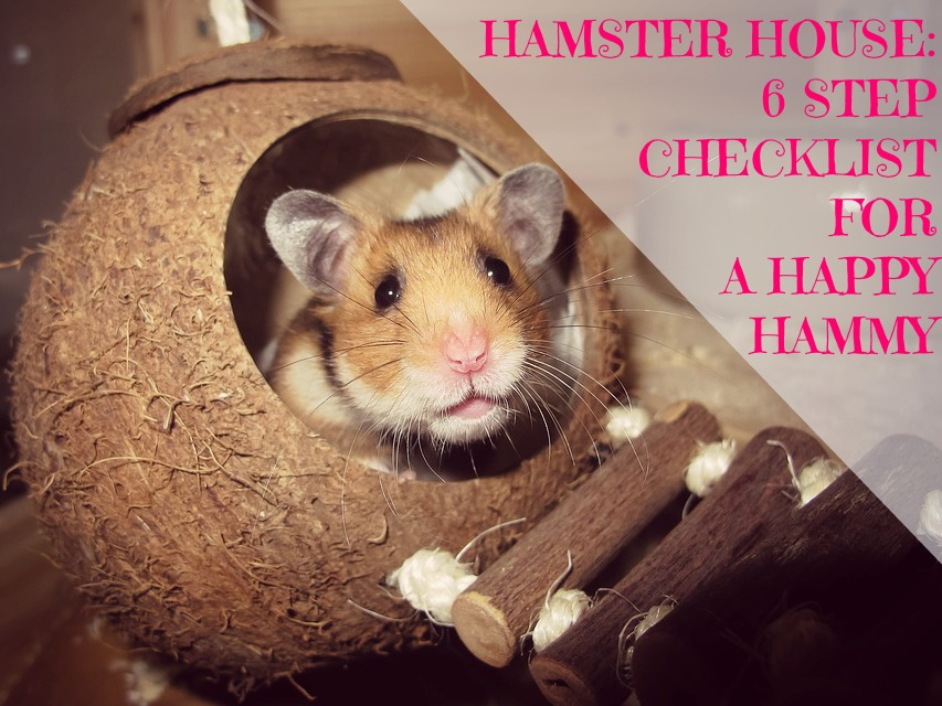 How to Make Your Hamster Happy