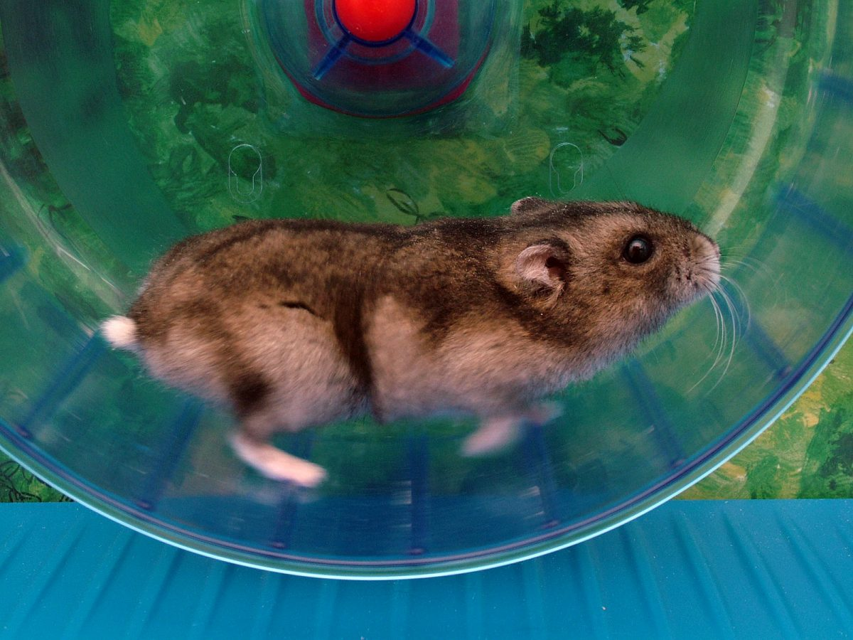 10 Easy Hamster Care Tips For A Happy Hammy (GUIDE)