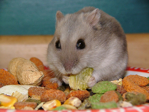 Best, Large Hamster Cage: The 4 best cages (and which to avoid)