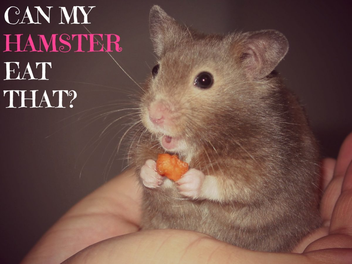 Can Humans Eat Hamster Food