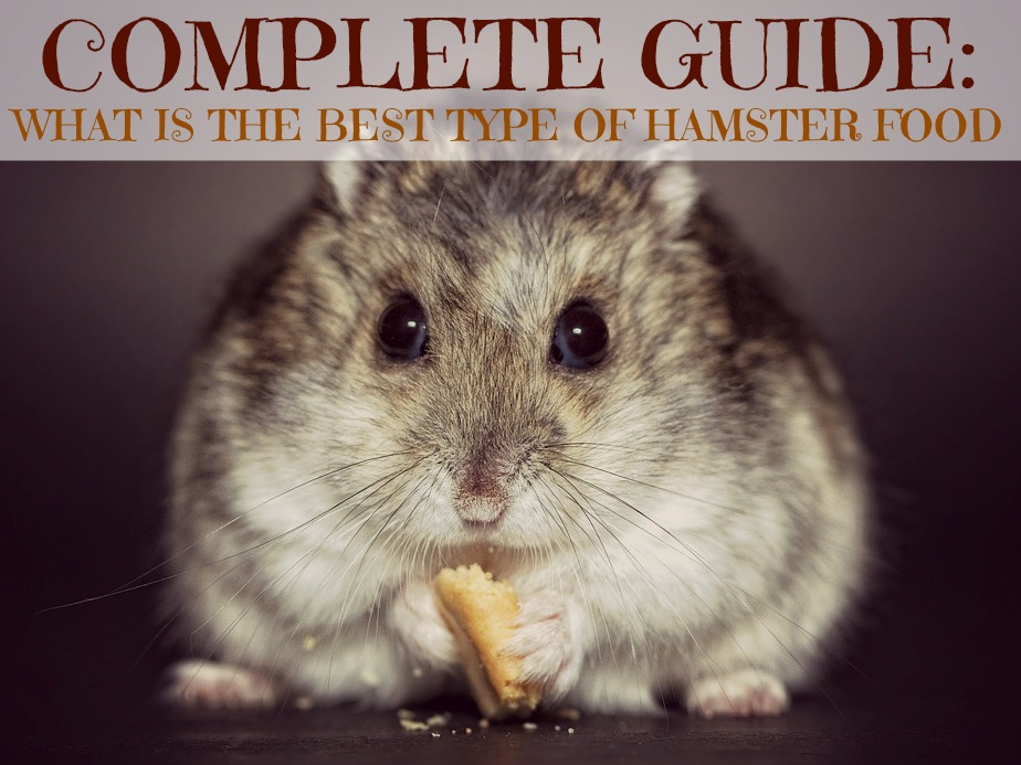 What Is The Best Type Of Hamster Food-7098