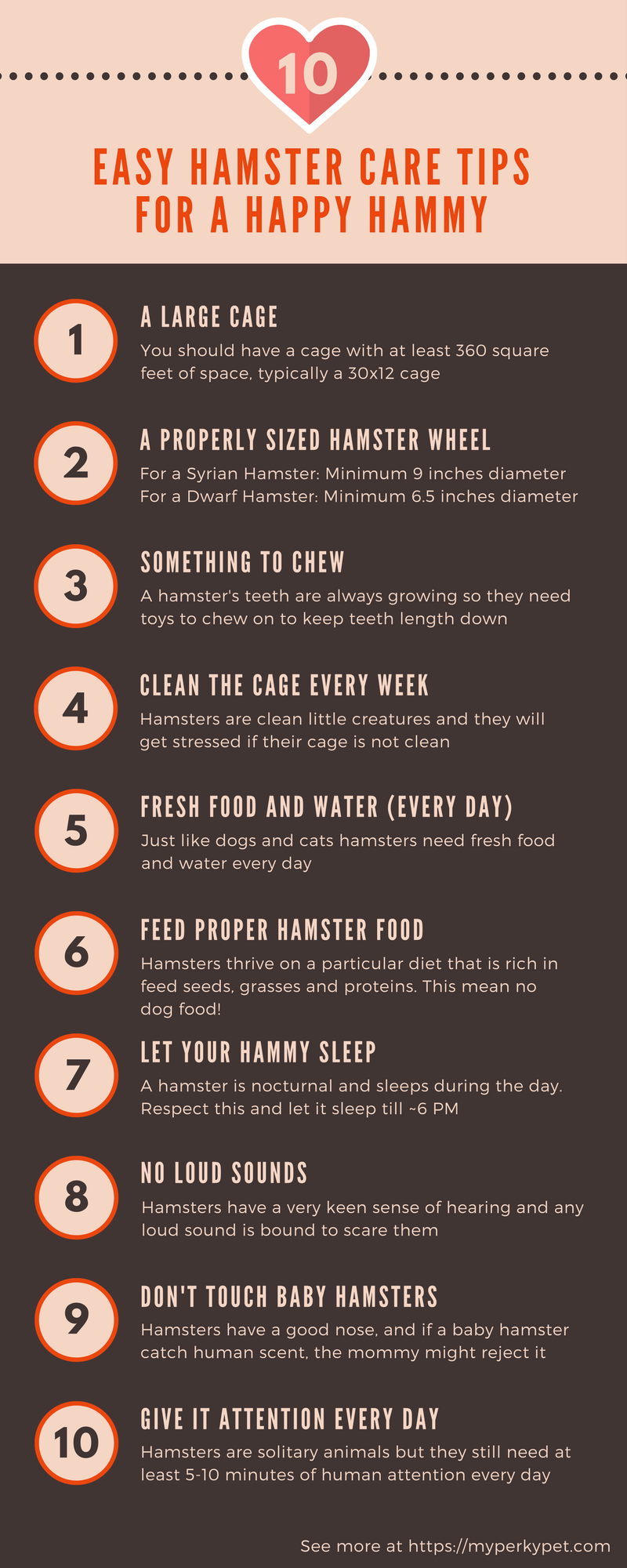 10 easy hamster care rights infographic