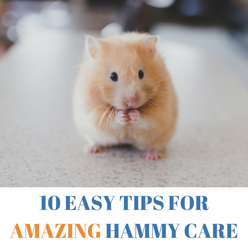 Hamster care tips