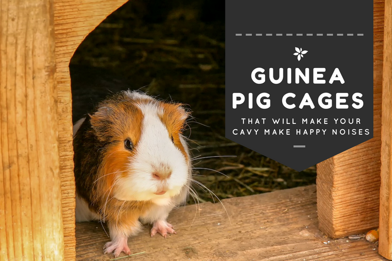 Best, Large Guinea Pig Cages (GUIDE, DIY & REVIEWS, 2019)