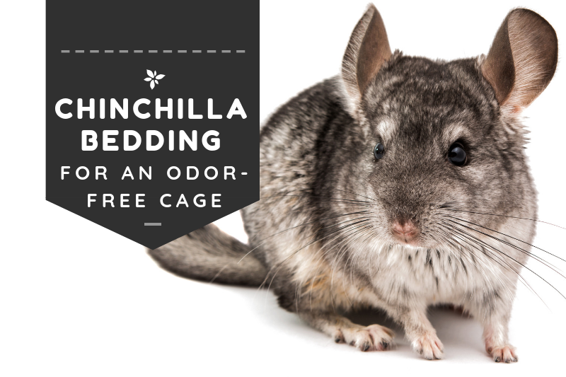 Chinchilla Bedding
