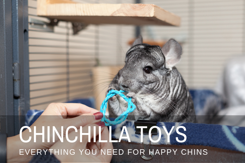 Chinchilla Toys