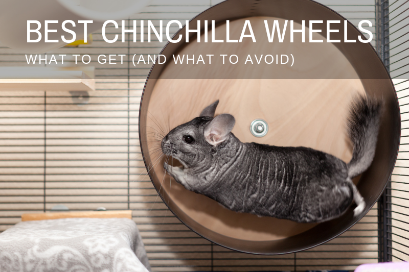 Chinchilla Wheel