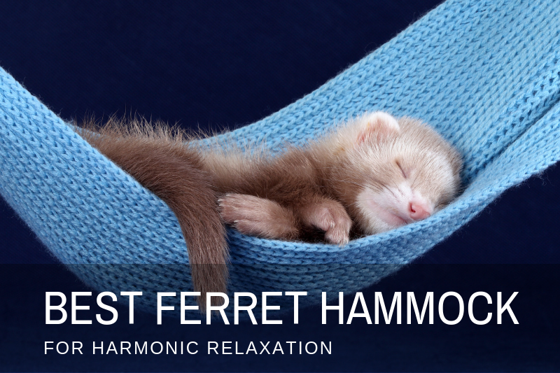 Best Ferret Hammock
