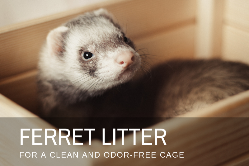 Best Ferret Litter